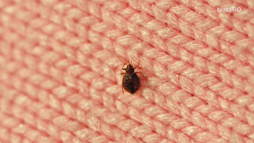 Science Tells Us What Color Bedsheets Bedbugs Avoid