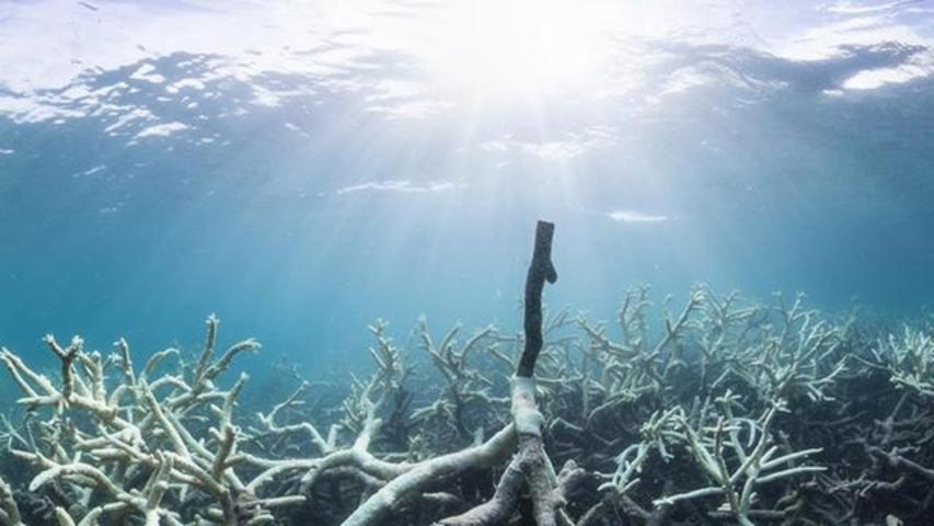 Study: Great Barrier Reef At Risk Of Dying Within 20 Years