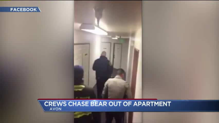 Video Shows Firefighters Coaxing Bear Out of Apartment Complex