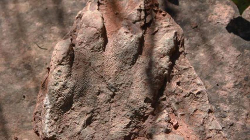 Hiker In Spain Finds Well-Preserved 230-Million-Year-Old Reptile Footprint