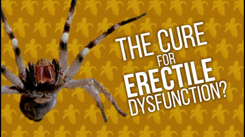 Are Spiders The Cure For Erectile Dysfunction?
