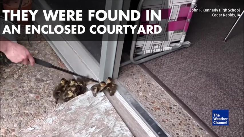 Ducklings Expelled from High School