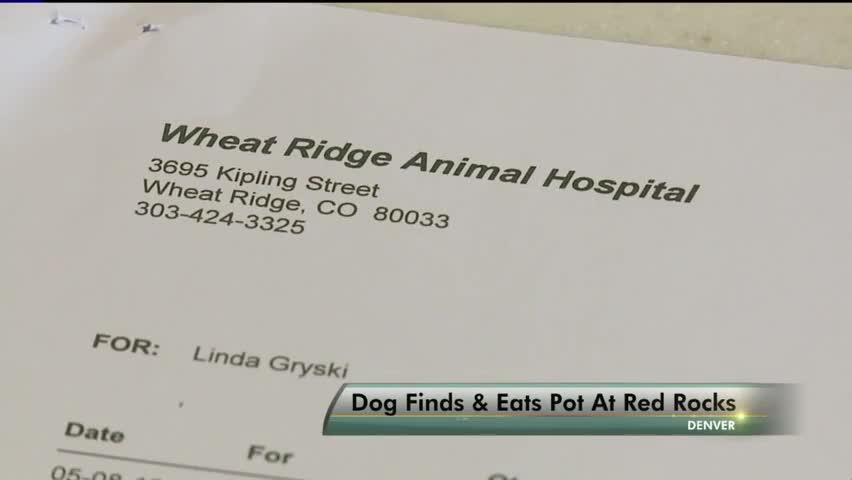 Number Of Dogs Needing Treatment After Ingesting Marijuana Skyrockets