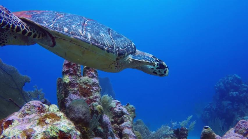 Diver takes selfie with endangered sea turtle