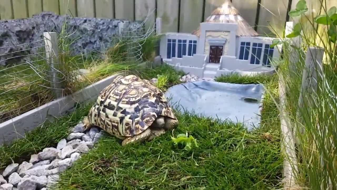 Miniature Jurassic Park For My Tortoise
