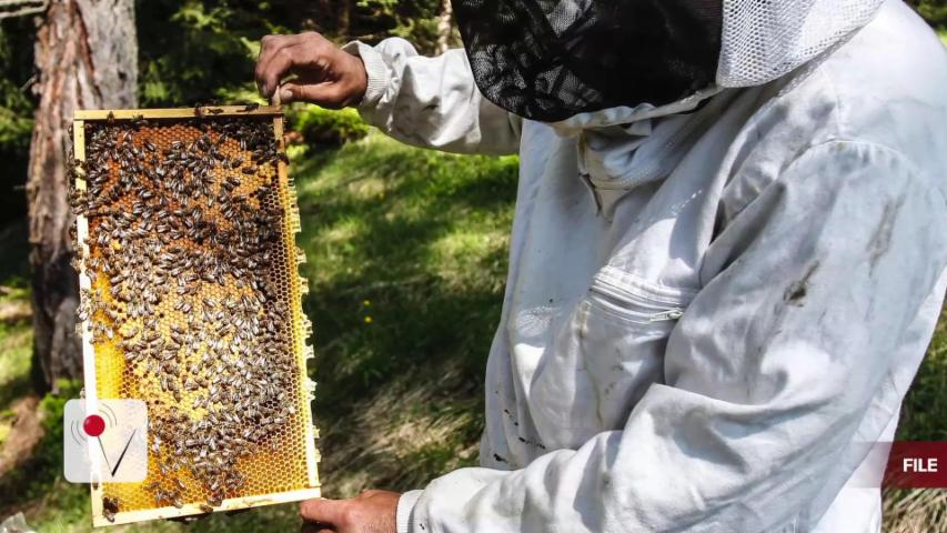 Swarm of Aggressive Bees Terrorize Neighborhood