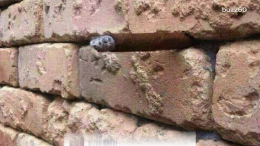 New Optical Illusion Sweeping the Internet Has People Hitting a Brick Wall