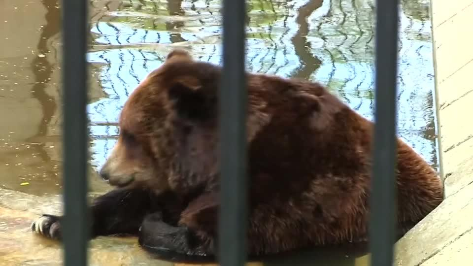 Man Attacked by Bear After Entering Cage at Zoo