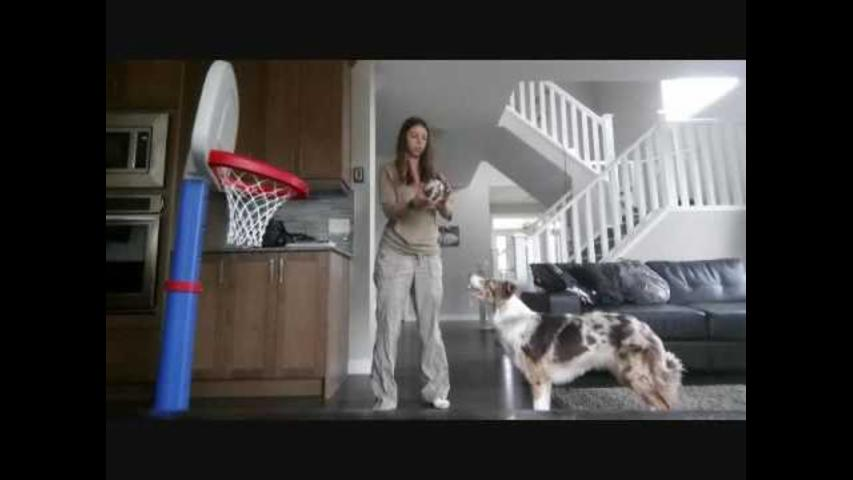 This Dog Has Mad Basketball Skills
