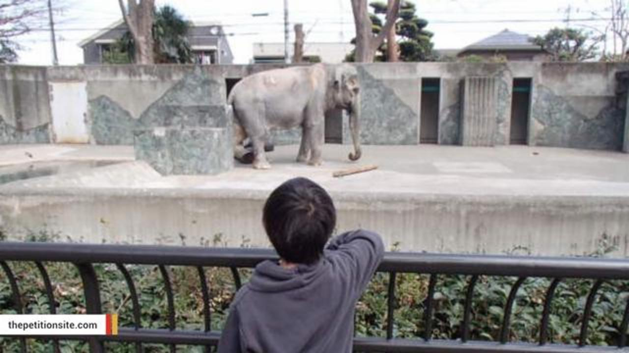 After Decades In Solitary Confinement, 'World's Saddest Elephant' Dies At 69