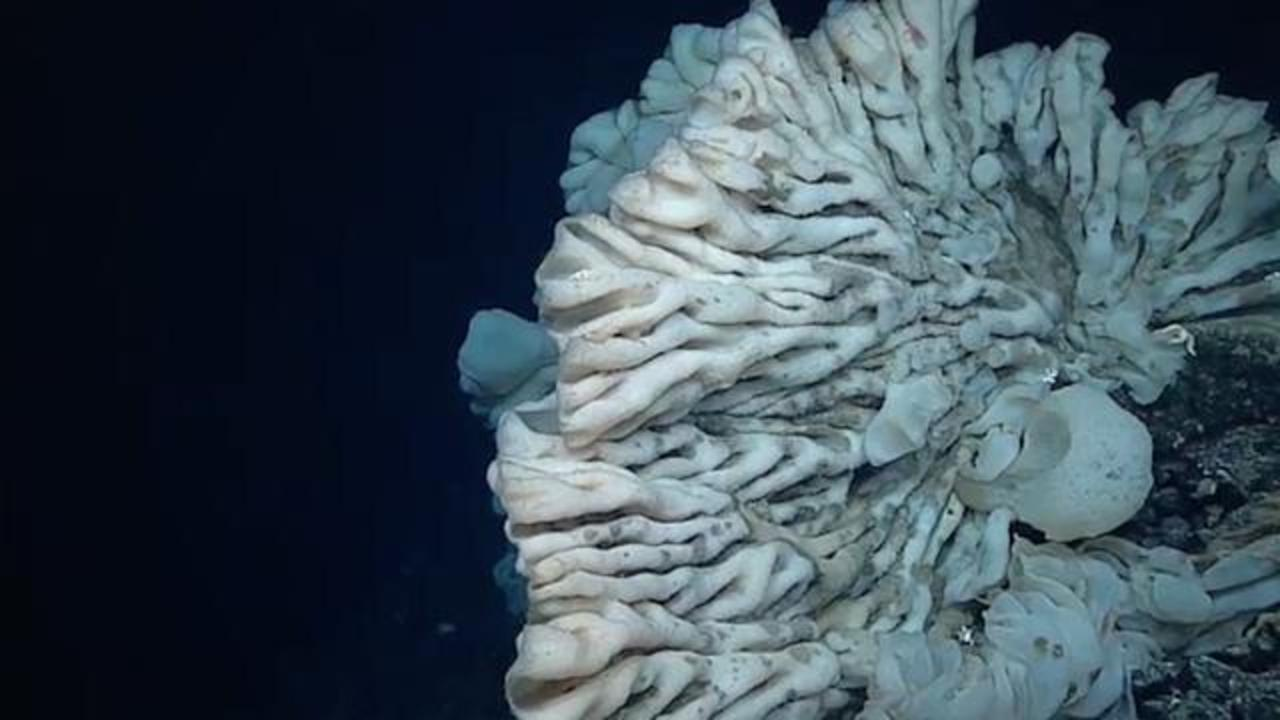 Deep-Sea Explorers May Have Spotted The World's Oldest Living Animal