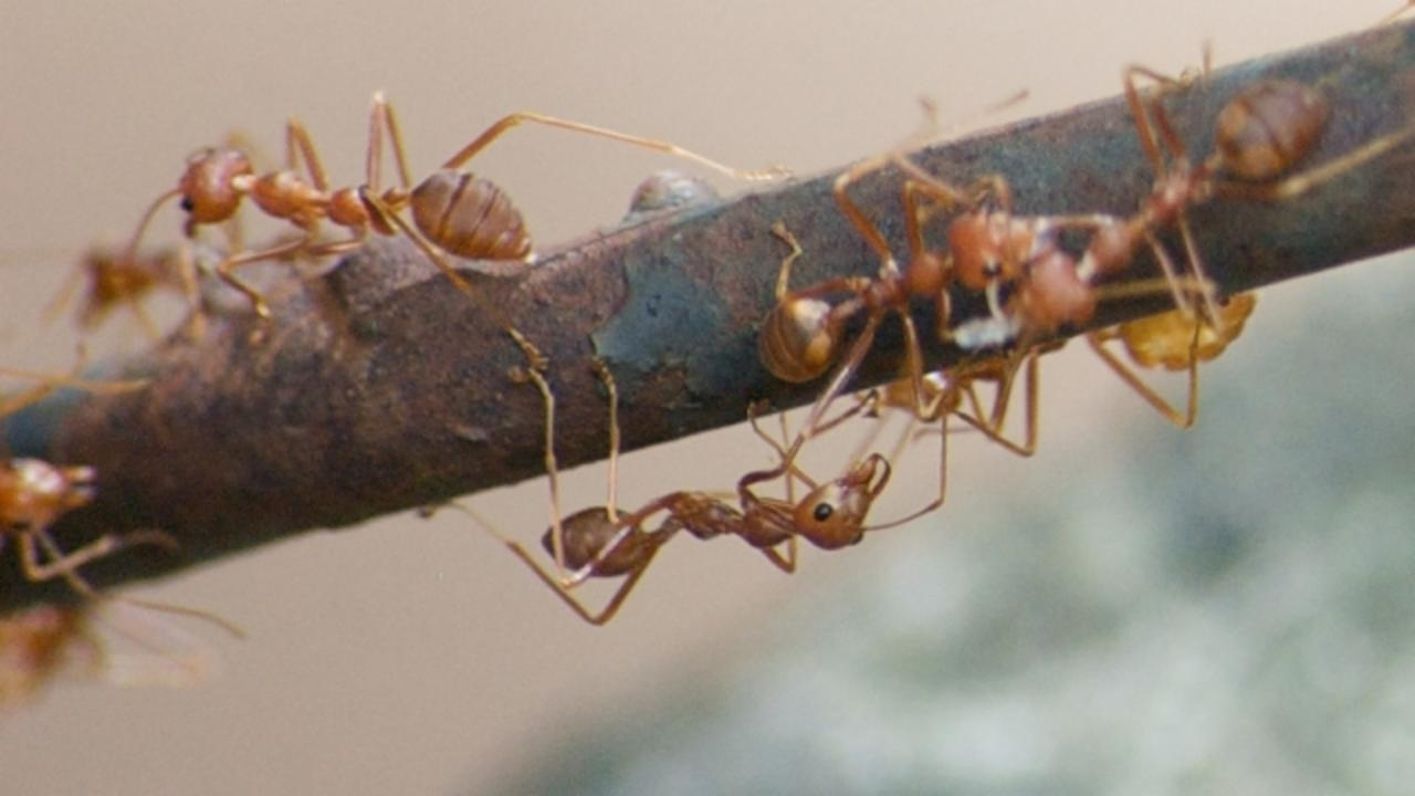 Woman Dies From Fire Ant Attack While Planning Her Mother's Funeral