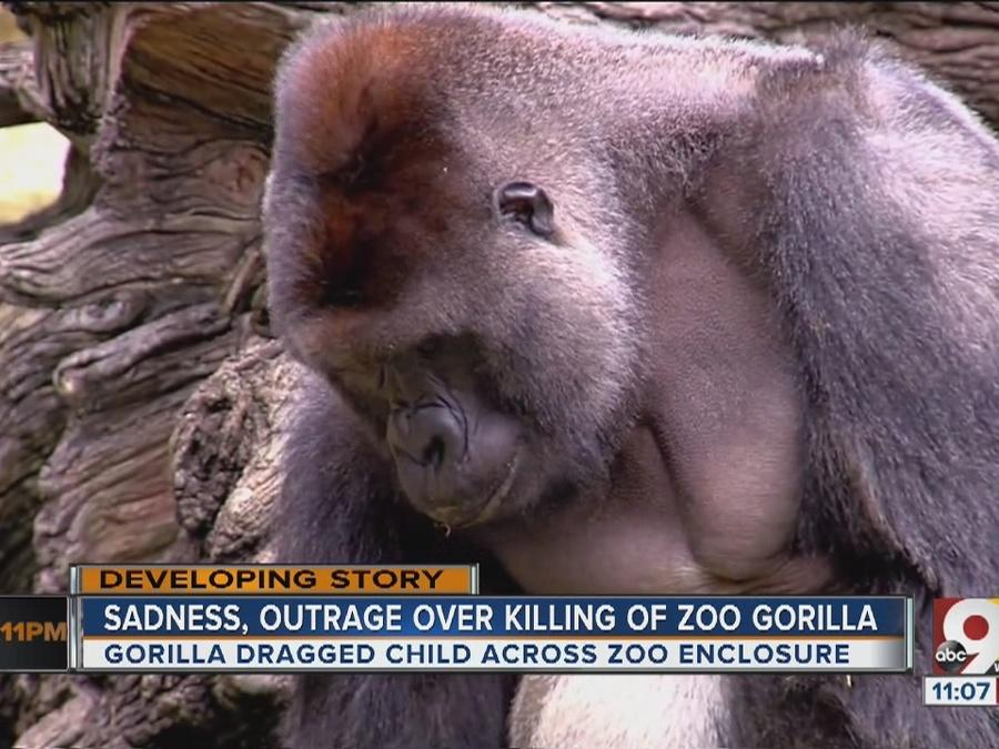 Sadness, outrage over killing of zoo gorilla