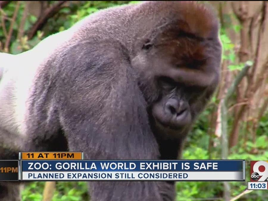 Gorilla World exhibit is safe, Cincinnati Zoo director says