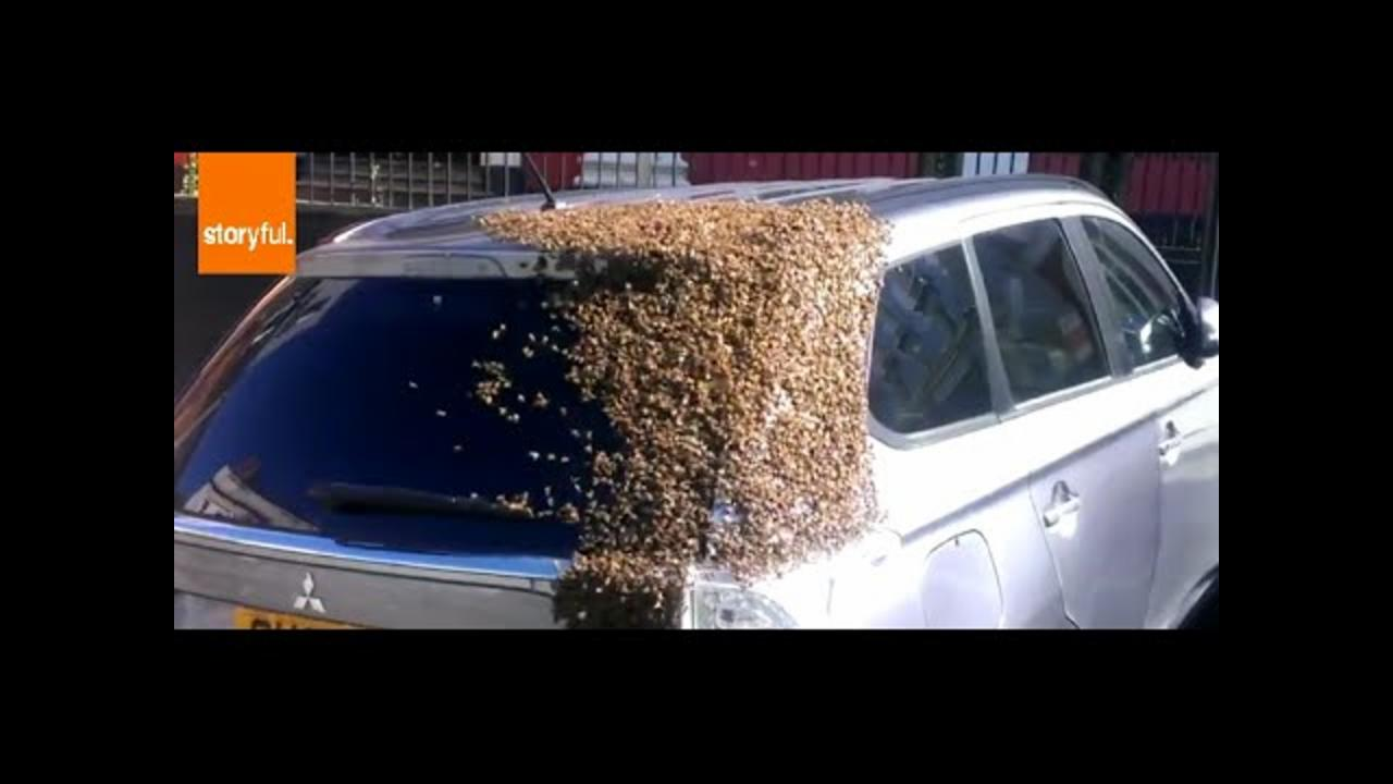 Hundreds of Bees Swarm Car in UK
