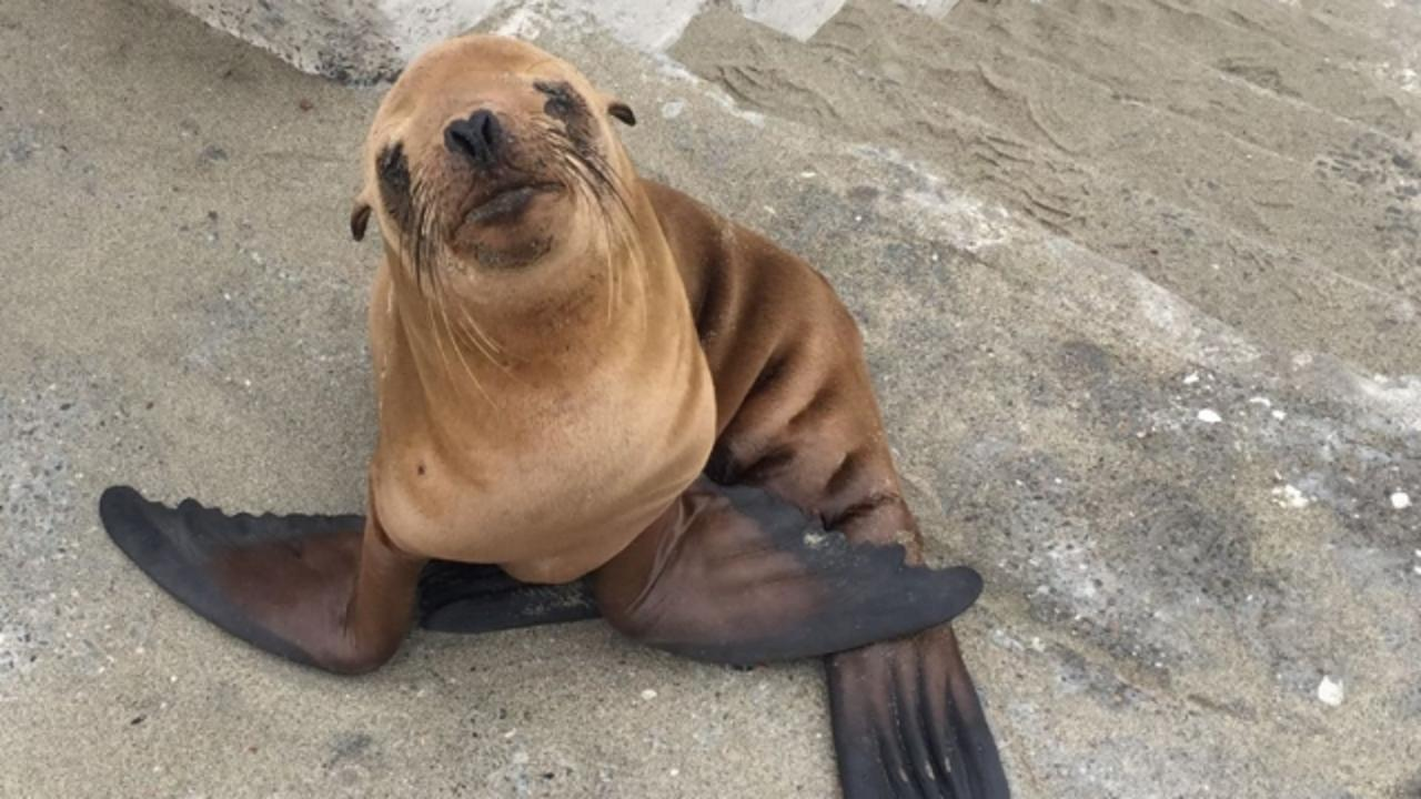 San Francisco Police Rescued an Adorable Baby Sea Lion