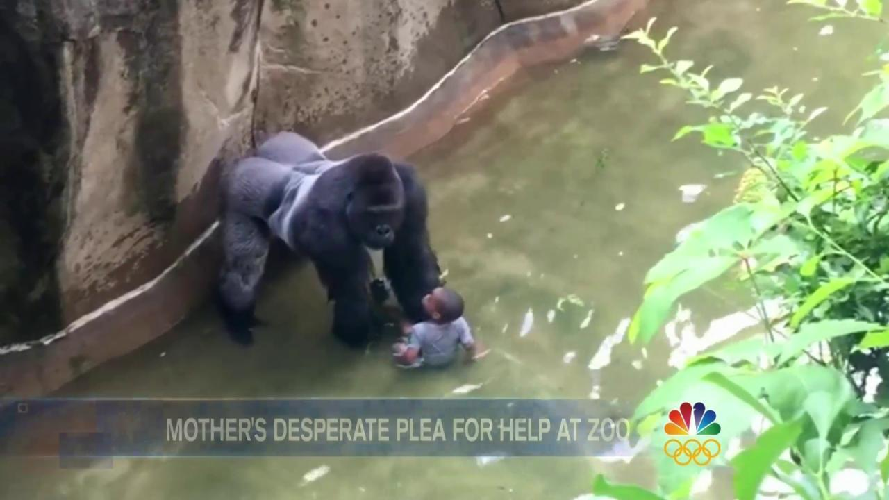 Audio Released From Mother's 911 Call During Gorilla Incident