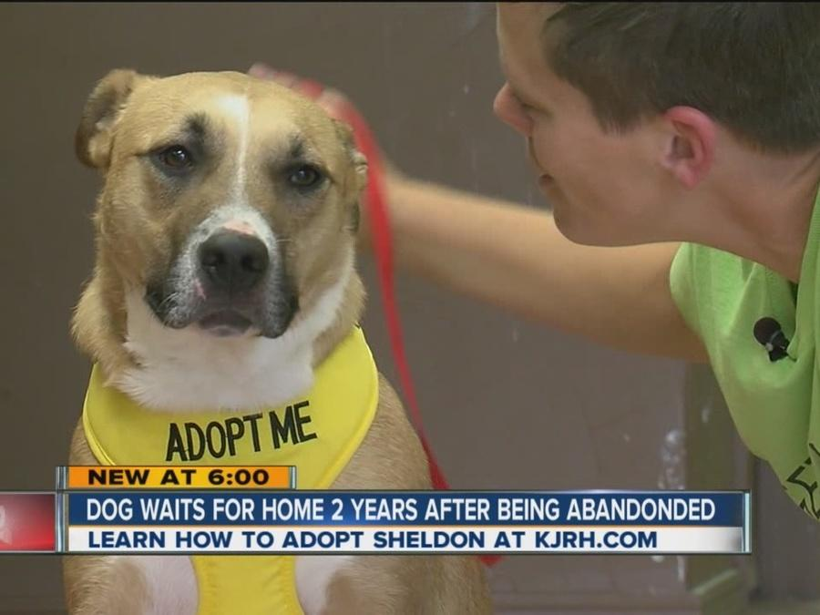 Dog Waits For Home 2 Years After Being Abandoned
