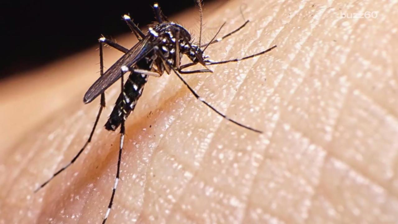 Why Beer Can Make You a Mosquito Magnet