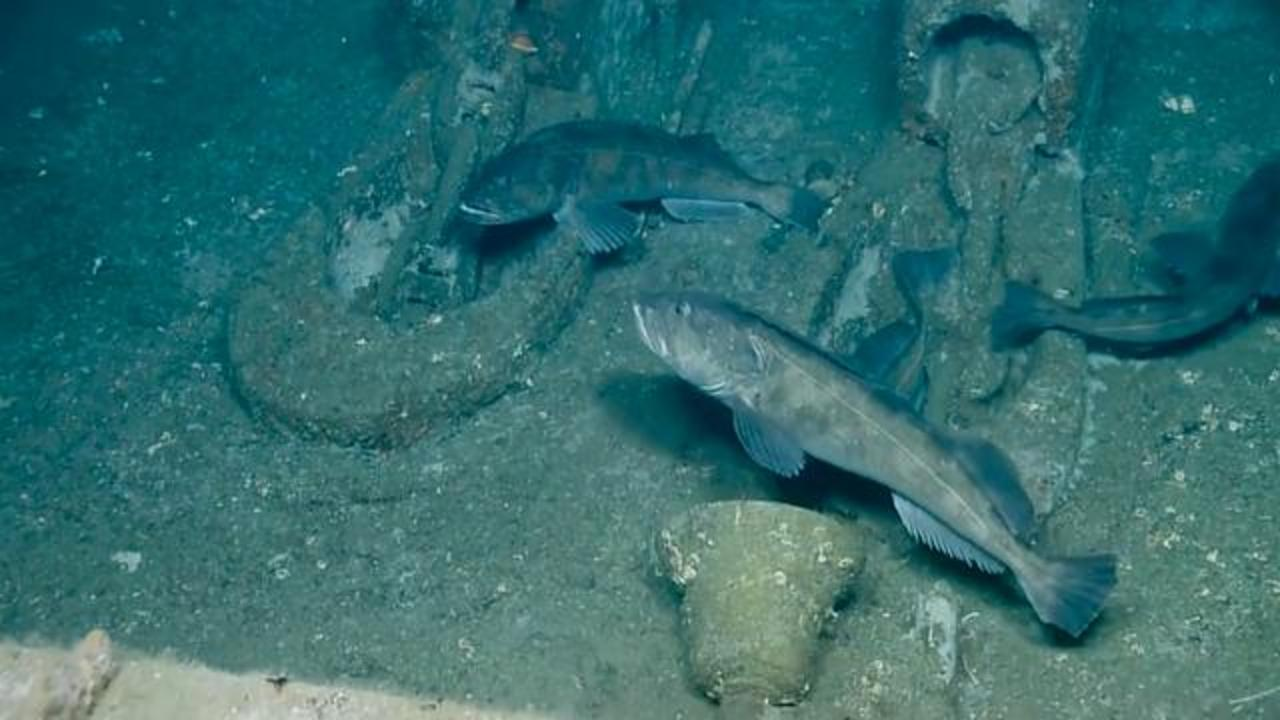 Deep Sea Exploration Crew Captures Remarkable Footage Of World War II Shipwreck
