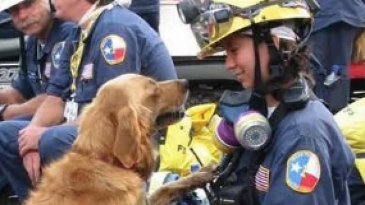 The Last Living Search Dog Deployed After 9/11 Attacks Has Died