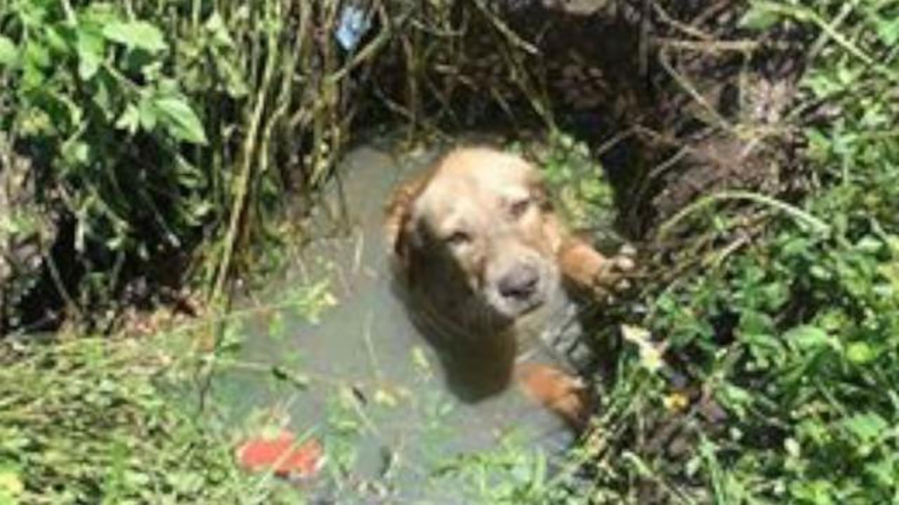 Police Deputy Adopts Dog That Was Found Trapped In Septic Drain
