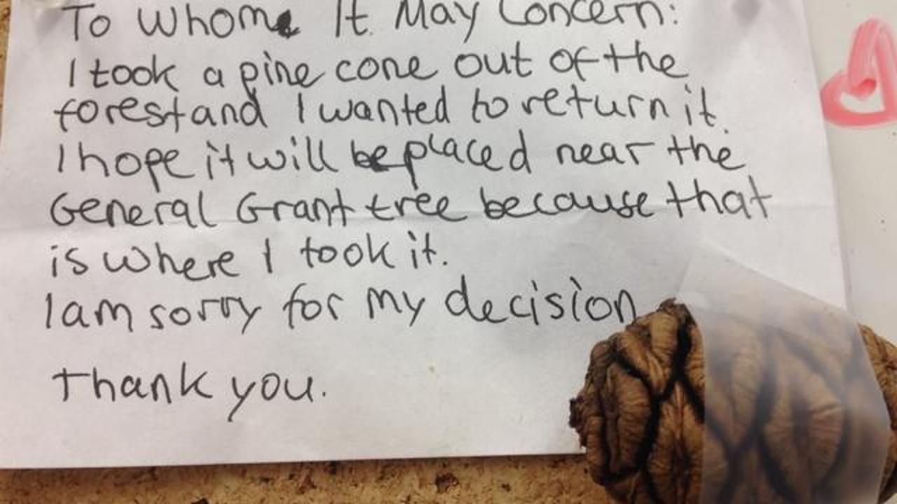 Honest Child Returns Pine Cone Taken From National Park With Heartfelt Apology Note