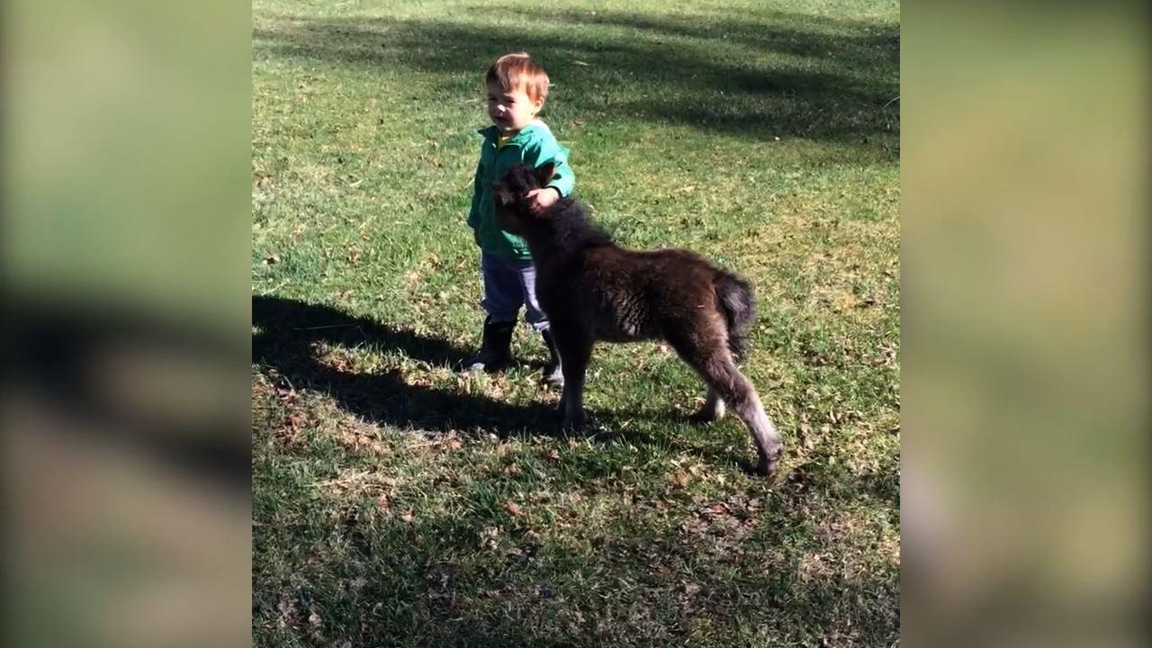 Little Boy Has Playdate With Miniature Horse
