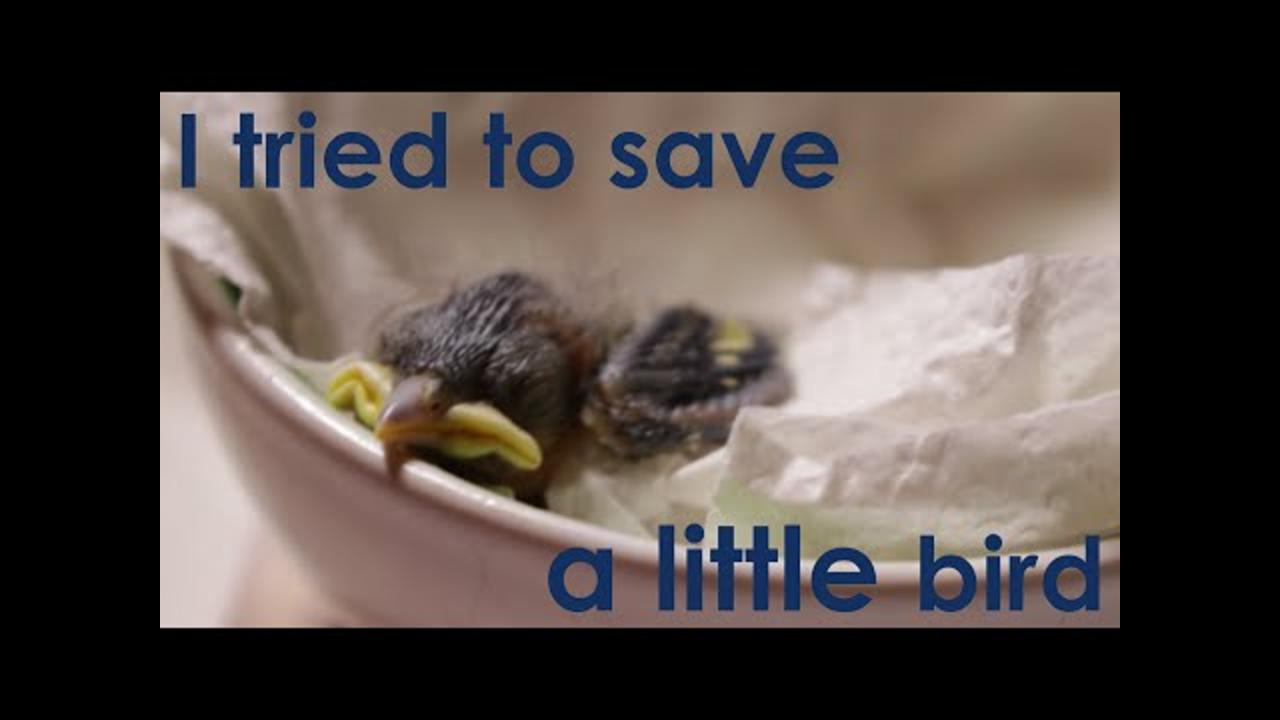 Guy Rescues Baby Bird That the Cat Dragged In
