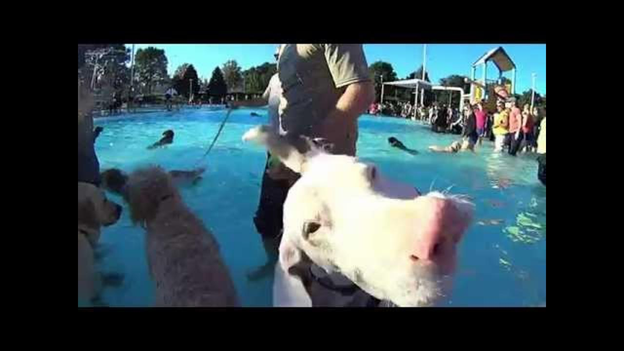 Dogs Have Time of Their Lives at Puppy Pool Party