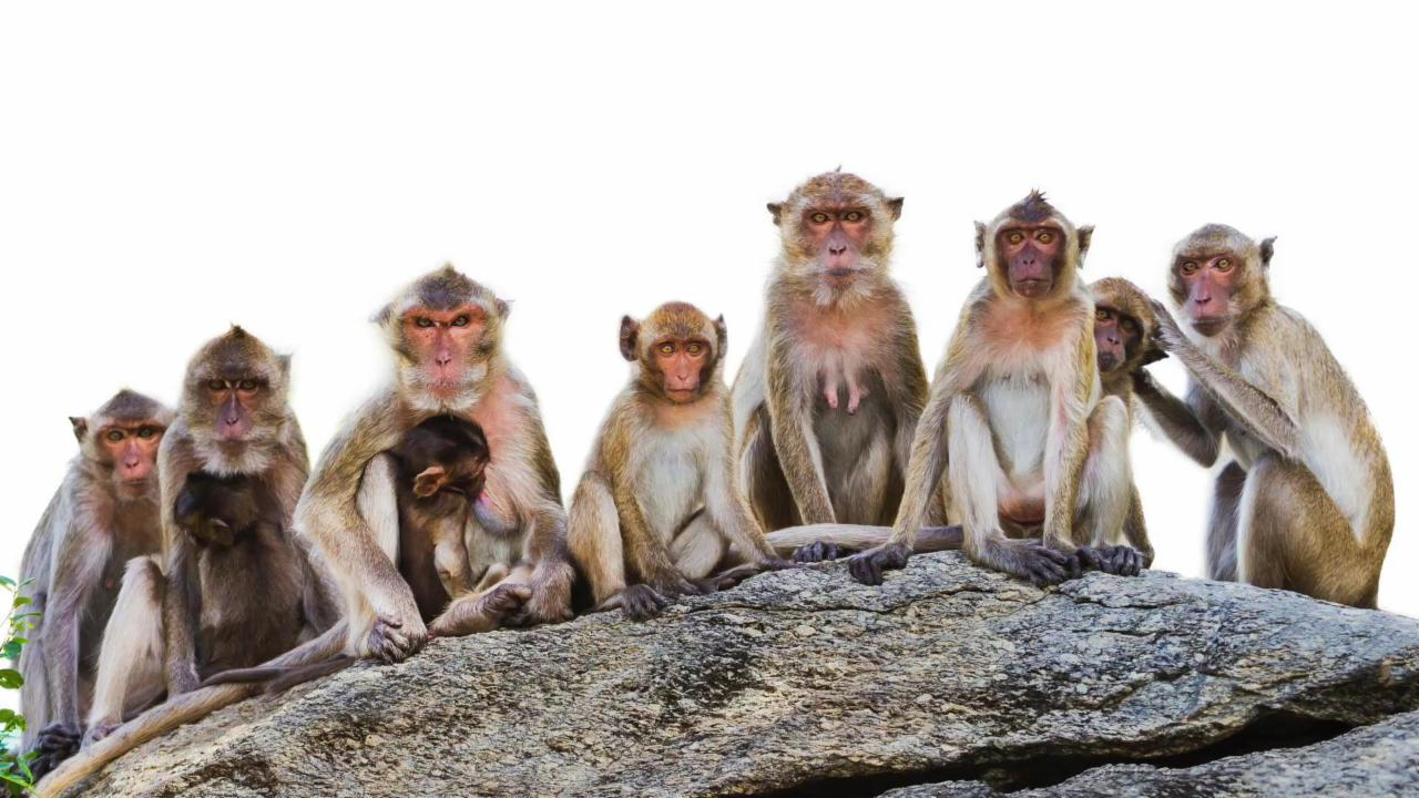 A Village In China Has Been Taken Over By Monkeys!