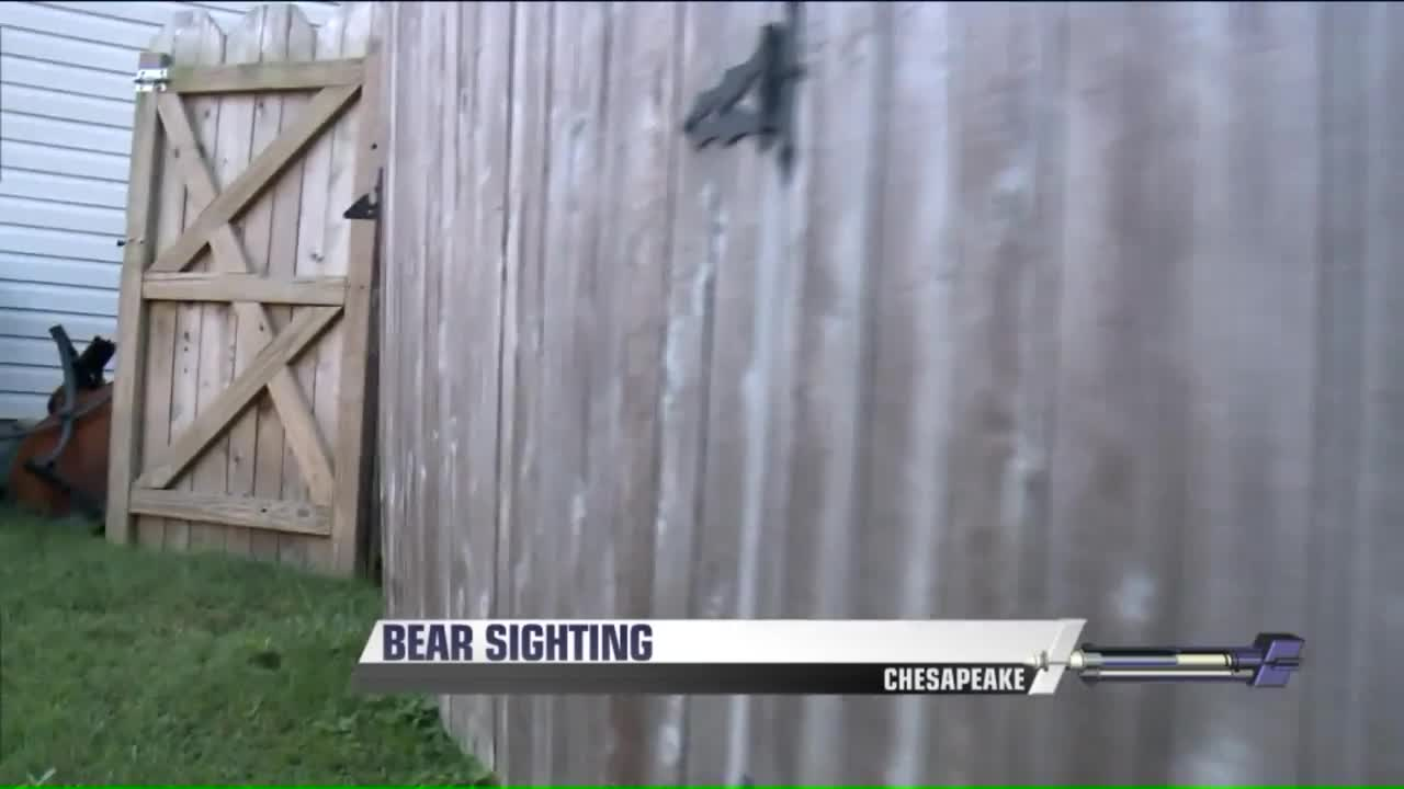 Bear Climbs Fence at Virginia Home to Steal Peanuts