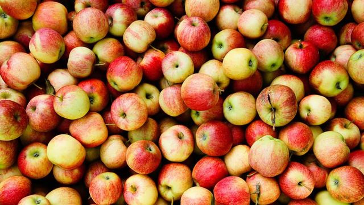 Scientist Uses Apples To Grow Human Ears