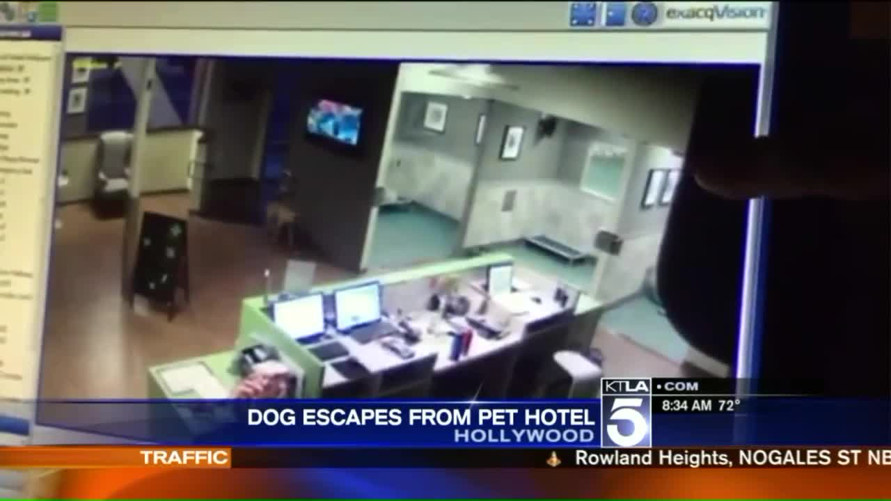 Dog Caught on Video Escaping from Pet Hotel in California