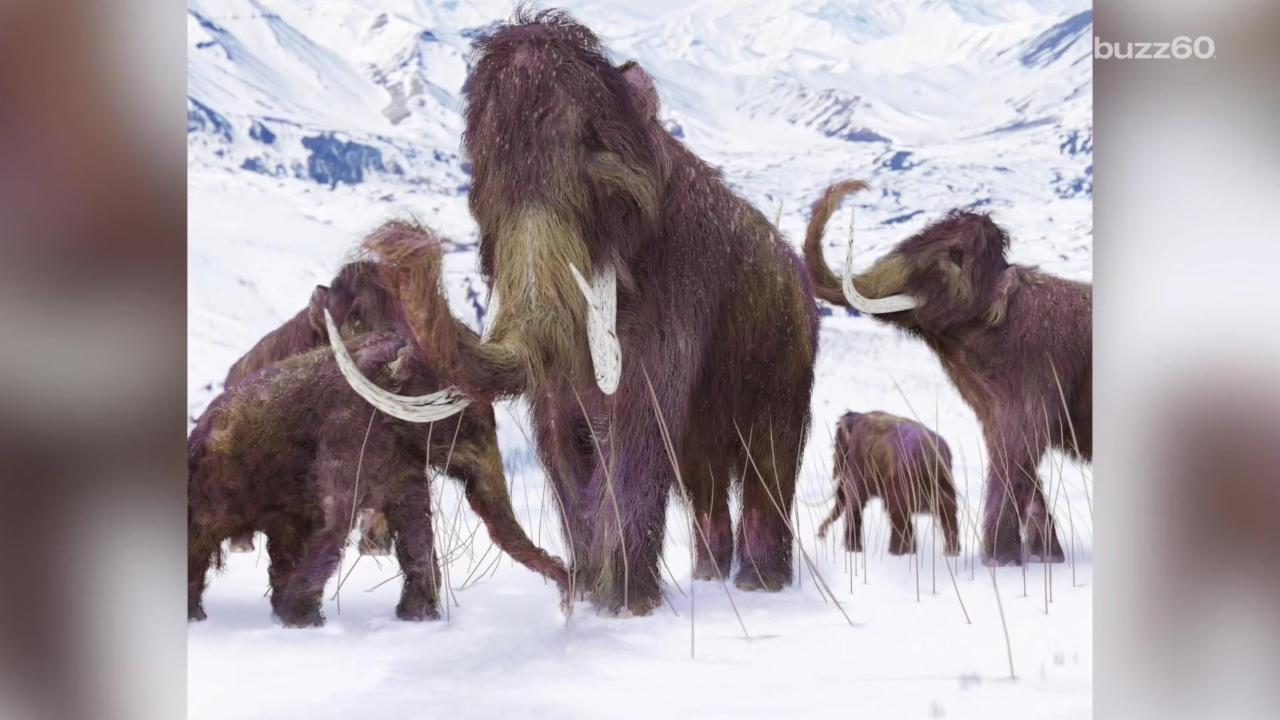 Scientists Find New Reason for Ice Age Extinction