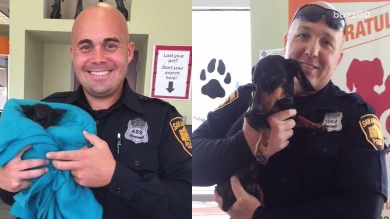 Sibling Cops Both Save Animals from Busy Traffic