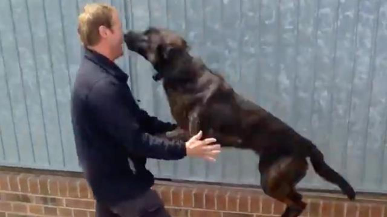 Video Of Dogs Getting Reunited With Handler Is Best Thing You'll See Today