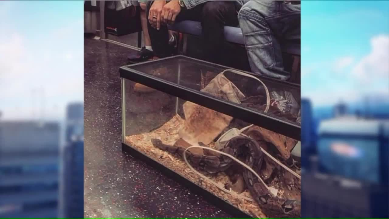 Instagram Account Shares the Most Bizarre Things Seen on the Subway