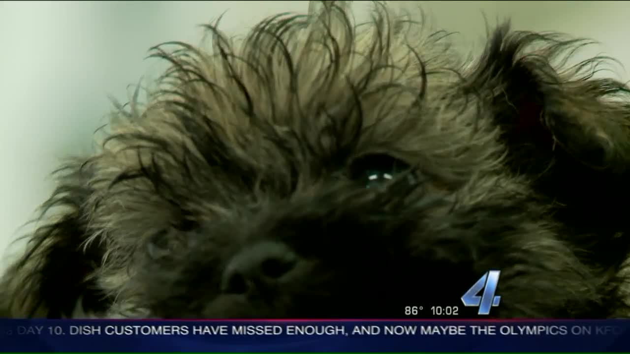 Nearly 40 Puppies Rescued from Oklahoma Home