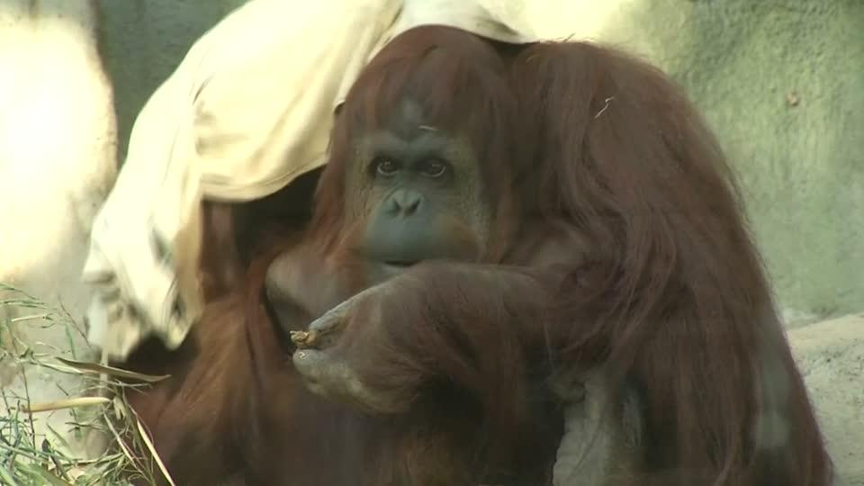 Buenos Aires zoo closes