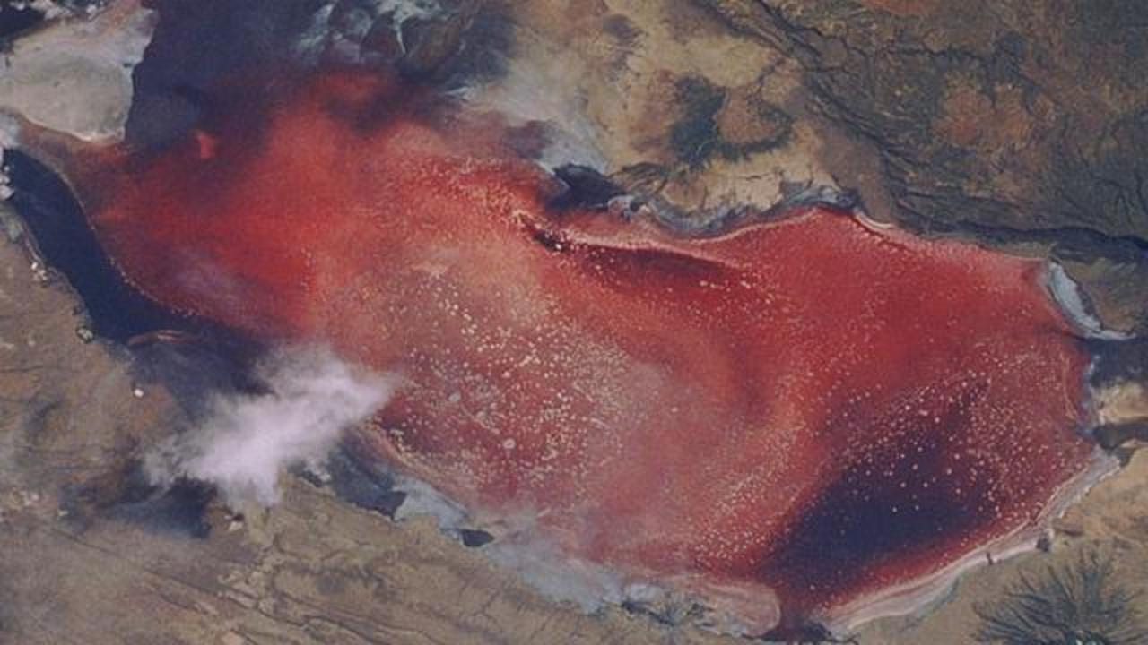 This Lake In Tanzania Is Deadly For Many Animals, But Remarkably Flamingos Thrive