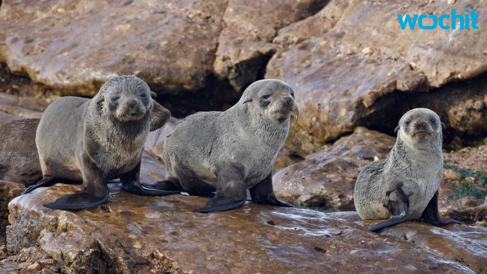 Marine Advocates Issue Warnings on Seal Pups