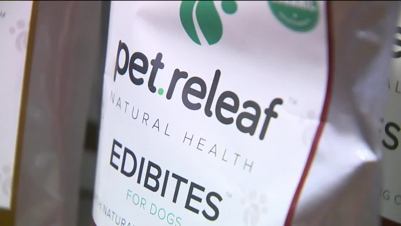 Cannabis Treats Could Help Calm Dogs Spooked by July 4th Fireworks, Thunderstorms