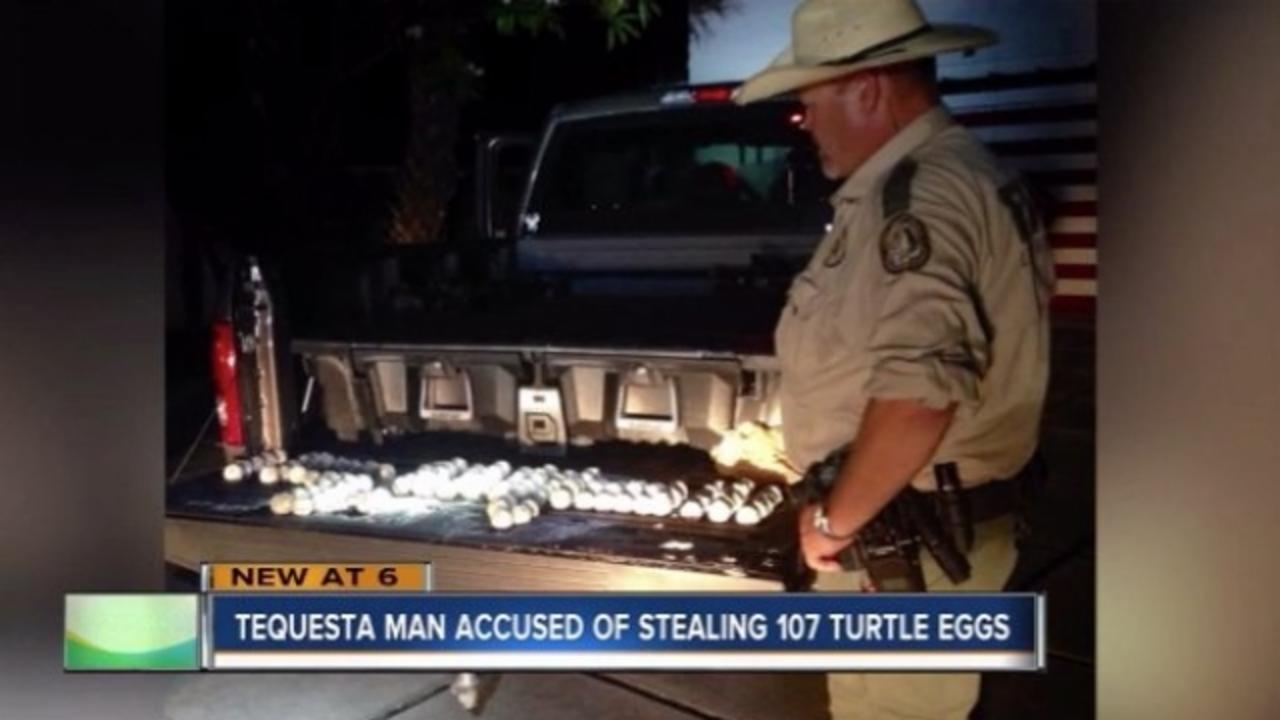 This Man Allegedly Stole 107 Eggs From a Threatened Species