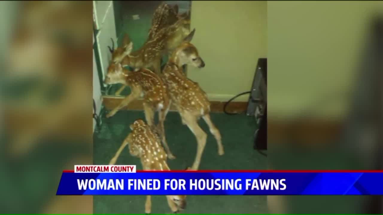Woman Facing Fine For Taking Home Fawns Says She Will Now Kill Animals She Finds
