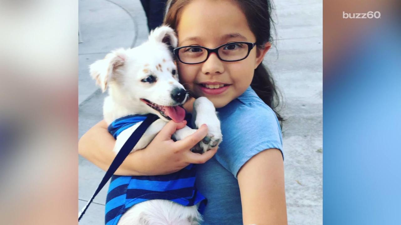 A 10-Year-Old is Teaching Her Deaf Puppy Sign Language