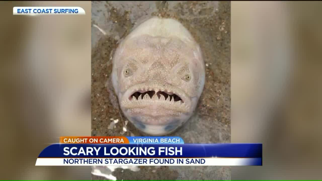 Beachgoers Warned of Scary-Looking Fish