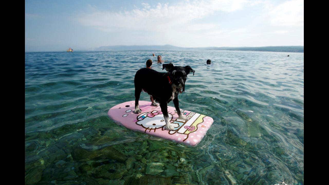 This dog beach is the vacation of your dreams
