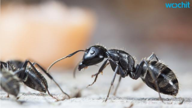Got Ants? Get Them Out with These 4 Tips