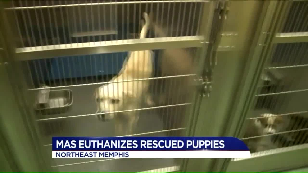 City Employees Suspended After Four Puppies Wrongfully Euthanized